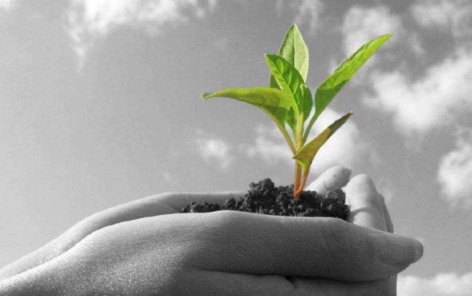 O que fazer, em nosso cotidiano, para ajudar a preservar o meio ambiente?