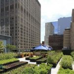 Hortas coletivas em centros urbanos
